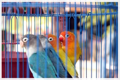 birdmarket1.jpg